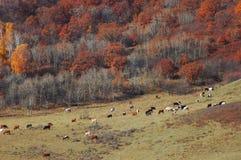 Pastagem no outono Imagens de Stock