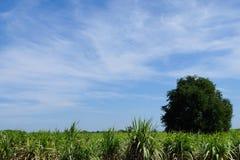 Pastagem verde Imagem de Stock