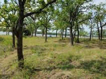 Pastando a área - lago Nocona Texas imagem de stock