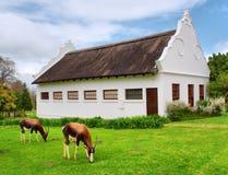 Pastando antílopes na frente da casa tradicional do holandês sul-africano fotografia de stock royalty free