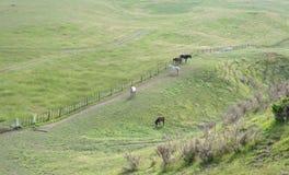 Pastando caballos en colinas verdes Imagenes de archivo