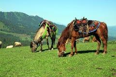 Pastando cavalos Fotografia de Stock Royalty Free