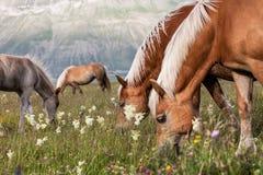 Pastando cavalos Foto de Stock