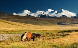 Pastando cavalos e a montagem nevado Fotografia de Stock Royalty Free