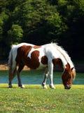 Pastando el caballo (7) Fotos de archivo