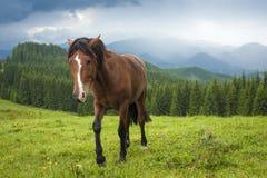 Pastando el caballo en la montaña paste en las montañas cárpatas después de lluvia foto de archivo libre de regalías
