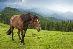 Pastando el caballo en la montaña paste en las montañas cárpatas después de lluvia foto de archivo