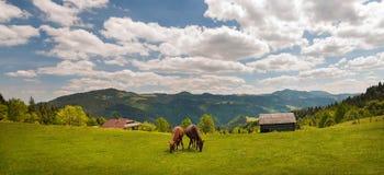 Pastando el caballo en la montaña paste en las montañas cárpatas en rayos de la puesta del sol fotografía de archivo libre de regalías