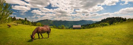 Pastando el caballo en la montaña paste en las montañas cárpatas en rayos de la puesta del sol fotos de archivo