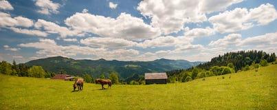 Pastando el caballo en la montaña paste en las montañas cárpatas en rayos de la puesta del sol fotografía de archivo