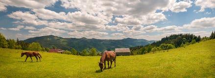 Pastando el caballo en la montaña paste en las montañas cárpatas en rayos de la puesta del sol imágenes de archivo libres de regalías