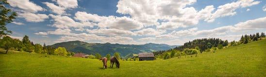 Pastando el caballo en la montaña paste en las montañas cárpatas en rayos de la puesta del sol imagenes de archivo