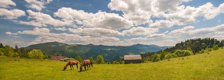 Pastando el caballo en la montaña paste en las montañas cárpatas en rayos de la puesta del sol fotos de archivo libres de regalías