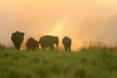 Pastando elefantes no crepúsculo Fotos de Stock