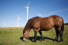 Pastando o cavalo Foto de Stock Royalty Free
