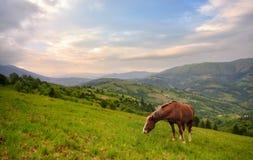 Pastando o cavalo Paisagem rural bonita da montanha com um cavalo vermelho que pasta na inclinação verde Mola nas montanhas, beir foto de stock royalty free