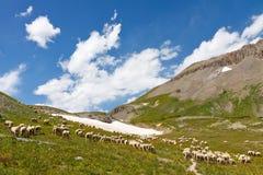 Pastando o rebanho dos carneiros Fotos de Stock