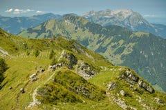 Pastando vacas perto da fuga de passeio para Brisen perto de Maria Rickenbach em Suíça imagem de stock royalty free