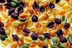 Pastas del shell Imagen de archivo libre de regalías