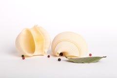 pastas del shell Foto de archivo libre de regalías