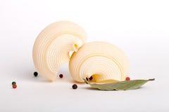 pastas del shell Imagenes de archivo