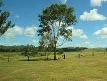 Paste el paisaje con los árboles y las cercas en Australia del este con las montañas que mienten en el fondo borroso Imágenes de archivo libres de regalías