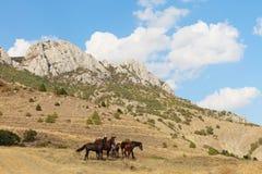 Paste los caballos fotografía de archivo libre de regalías