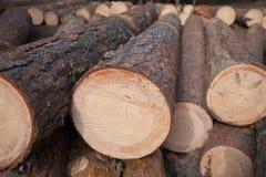 Pastei van de Logboeken van de Pijnboom stock fotografie