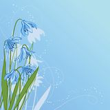 Pastel background with blue snowdrop Stock Photos