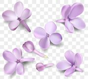 Pastel background with lilac flowers. Stock Photography