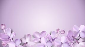 Pastel background with lilac flowers. Stock Images