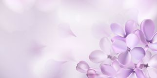 Pastel background with lilac flowers. Stock Photo
