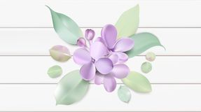 Pastel background with lilac flowers. Soft pastel color floral background. Purple Lilac flowers and petals watercolor country style vector illustration template Royalty Free Stock Photos