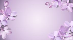 Pastel background with lilac flowers. Royalty Free Stock Images