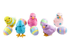 Pastel Birds and Eggs Stock Image