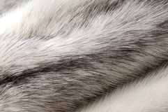 Pastel black cross mink fur texture Stock Photo