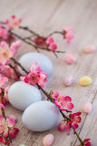 Pastel Blue colored Easter Eggs and jelly beans with Cherry Blos. Three pastel blue Easter eggs with jelly beans and Cherry Blossom branches Stock Photography