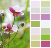 Pastel color chart palette swatches. Anemone Japanese in pastel color chart palette swatches royalty free stock photography