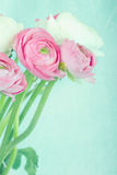 Pastel color flowers on textured background Royalty Free Stock Images