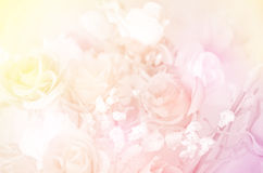 Pastel Color of Rose Bouquet. Stock Photo