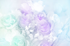 Pastel Color of Rose Bouquet. Royalty Free Stock Photo