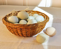 Pastel colored chicken eggs in an Easter basket. Royalty Free Stock Images