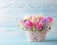 Pastel colored flower Royalty Free Stock Images