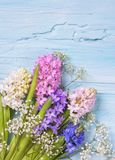 Pastel colored flowers royalty free stock photos