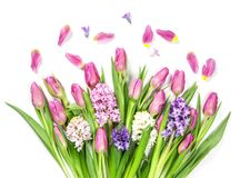 Pastel colored flowers. On a white background Royalty Free Stock Photo