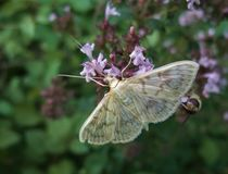 Pastel colored small butterfly Royalty Free Stock Images