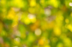 Pastel colors of bright autumnal season. Natural background - pastel colors of bright autumnal season Stock Image