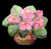 Pink violets in a pot. Beautiful and delicte houseplant. vector illustration