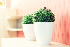 Pastel colors interior with pot of grass Royalty Free Stock Images