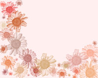 Pastel daisy edging/background Royalty Free Stock Images